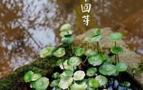 中國節氣:立春
