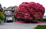 世界上最美的10棵樹,中國只有一棵