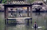溫州第一動物園——溫州動物園