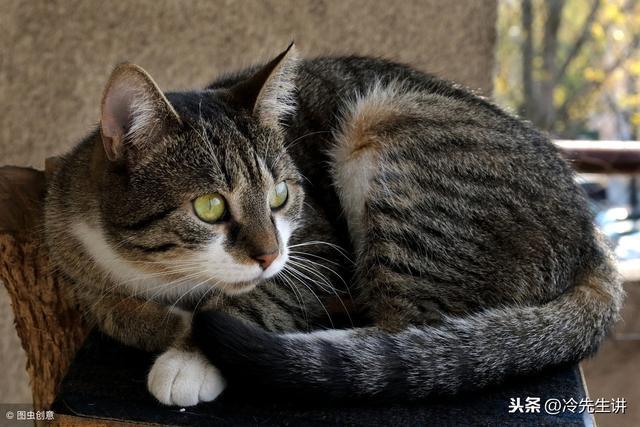 閩南漳州俗語故事之拿飯匙抵貓