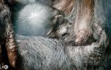 小寶寶趴在媽媽肚子上睡覺,看了這張圖的人都會為他擔心