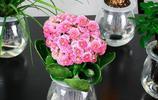 這8種花扔水裡就能蹭蹭長,怎麼折騰都死不了還瘋長,乾淨不爛根