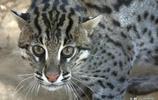 深山老林撿到的奶貓,長大後發現不同,嚇壞原來的主人
