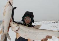 選好了釣位,發現有鸕鶿在一旁捕魚,這樣還能釣到魚嗎?