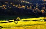 內陸草原——關山草原