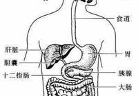 """腸胃吸收與排洩平衡很重要,如果""""腸漏""""了該怎麼辦?只需4步"""