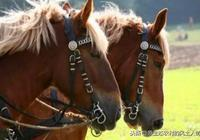 你知道馬蹄鐵對奔馳的駿馬多重要嗎?一個馬掌覆滅了一個國家