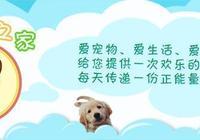 被遺忘的中華神犬:狼青犬