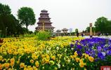 隨拍陝西中華石鼓園,傳承中華文化的聖地,寶雞城市新名片!