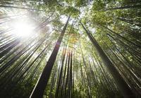 小說:他天生擁有五靈根和超強體質,所以得到了仙人傳承