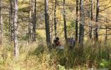 這對夫妻在林子裡採到了啥樂這樣?在大興安嶺你沒準也能碰上!