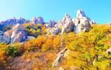 """離青島市區20公里,藏著一個天然""""彩林博物館"""",到了最佳觀賞期"""