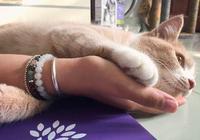 女孩求助如何給家裡的貓拍照,網友們紛紛表示:拍一百張選一張
