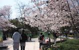 江蘇這6個賞花絕美的景區,最美的時候來了,你準備好了嗎?