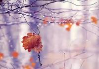 秋風起,秋雨落