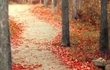 不同的路有不同的風景,秋天走了,冬天你好!