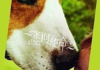 《一條狗的使命2》萌犬貝利迴歸再演暖心故事