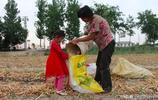 爸媽出去打工,3歲女娃跟奶奶生活,農忙季主動幫奶奶幹活