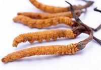 孕婦可以吃冬蟲夏草嗎 冬蟲夏草哪些人不能吃