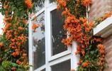 這八種的爬藤植物一開花就成瀑布,讓你置身於花海中