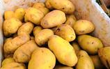 60歲農村老人種植一種蔬菜,2畝收入15000元,背後故事讓人感動