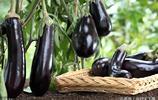 在農村吃酒席,你發現很少會出現一道菜,就是茄子,為什麼?