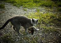 從寵物貓嘴裡救下一隻小鳥,從此家裡多了個寵物,貓有了朋友!