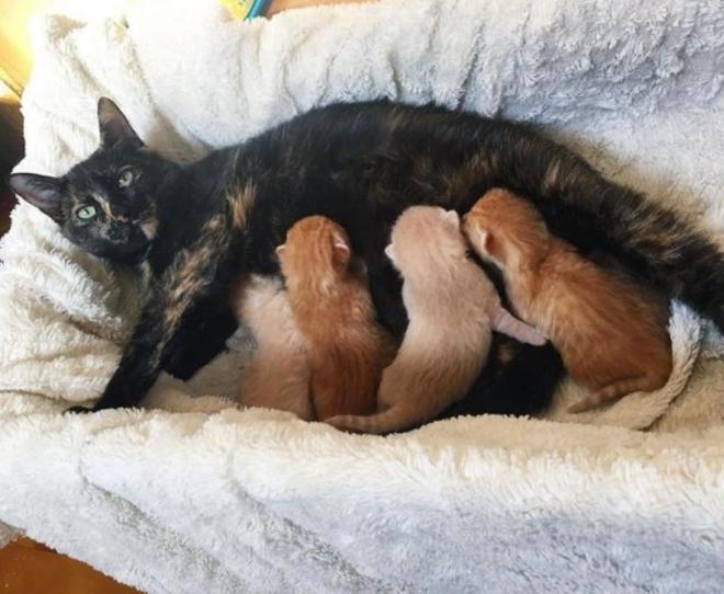 懷孕母貓路邊求助,小夥帶回家以為賺了,結果生出4只純色小橘貓