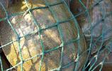 愛釣魚的有福了,瞧這新上的改良版漁具,款款深藏不露,功能強悍