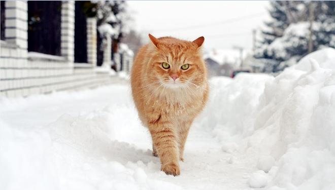 加菲貓大家瞭解它嗎?