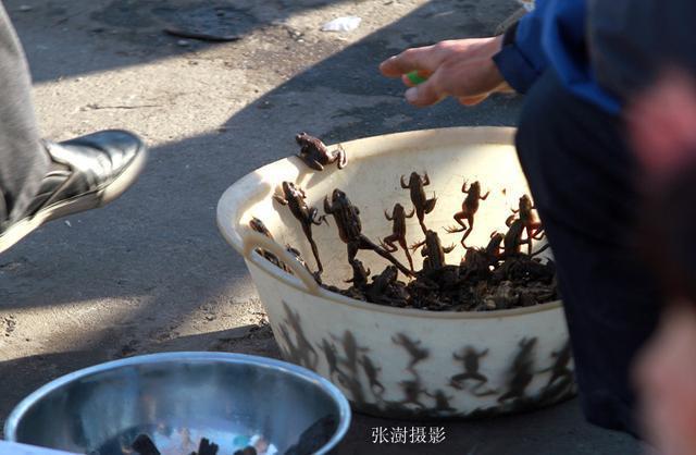 松江長千里 開江魚最鮮 哈爾濱魚市 大白魚敖花紅頭蝦啥都賣