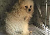 狗直到5歲一直被關狹小籠子,被救出第一次踩地面,小狗開心極了
