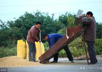 """農民朋友注意:""""打白條""""收大豆?這是個坑,千萬別跳!"""