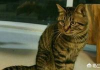 我國的狸花貓在國外流行嗎?有何依據?