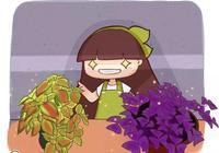 """""""綠蘿""""養膩了,這6種花葉子""""最值錢"""",光不夠照樣能長茂盛!"""