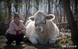 河南農村56歲大媽用19000元,買了一隻大寵物,看是啥稀罕