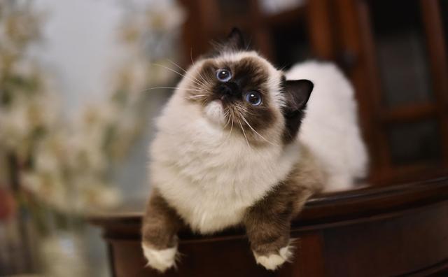 貓咪冷知識!你熟睡以後貓咪聞你,可能是在檢查你是不是死掉了