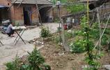 """皖北農村單身大哥,小院裡種植10種""""稀罕物"""",網友們看看種的啥"""