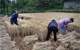 你幹過這樣的體力活嗎?山區人們收穫的季節,累,並快樂著