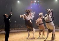 摒棄了真實動物表演的馬戲團,為觀眾獻上一出高科技的另類動物秀