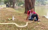 養眼鏡蛇做寵物