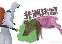 非洲豬瘟疫苗研製出來了嗎?現在建場養豬可行嗎?