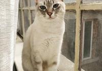 闢謠:鏟屎官把貓當成寵物,但是在貓咪眼裡鏟屎官卻有著不同身份