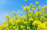 浙江油菜花最美的4個地方,花開之時,美如仙境
