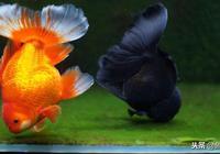 新魚到家的過水與消毒方法,讓你的魚兒安全度過危險期~
