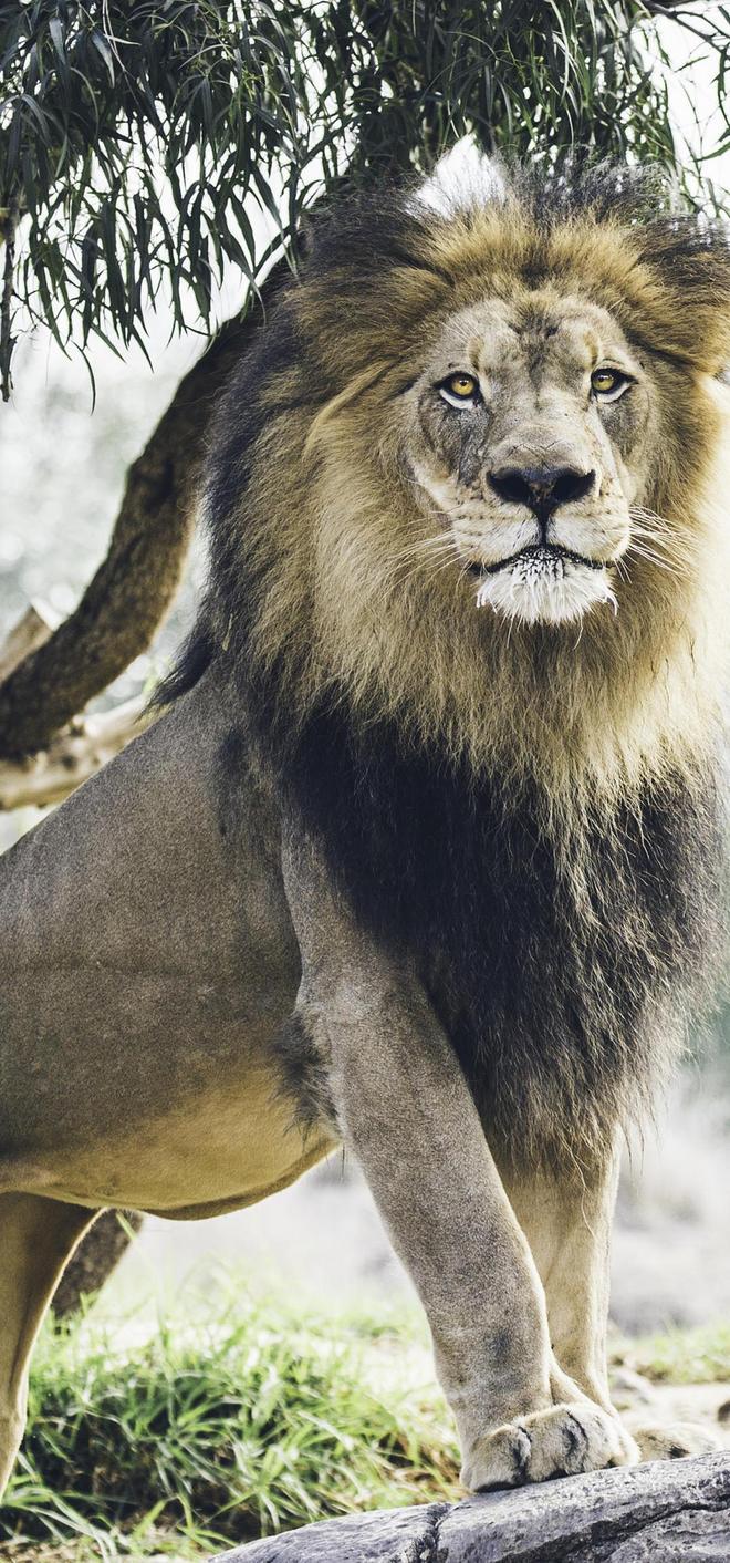 神奇的大自然孕育出各種生靈,保護動物,不要讓他們成為了歷史