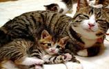 喵星人帶小貓咪,這畫面好溫馨啊