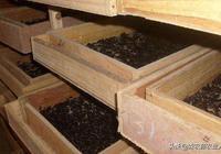 特種經濟動物的養殖  黃粉蟲的實用養殖