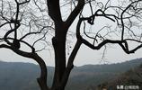 一棵樹的10張肖像!一棵樹或兩棵樹你能拍出來多少張不同的照片?