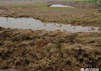 現在湖北很多地方把農田改為養龍蝦好嗎?對環境來說有好處嗎?